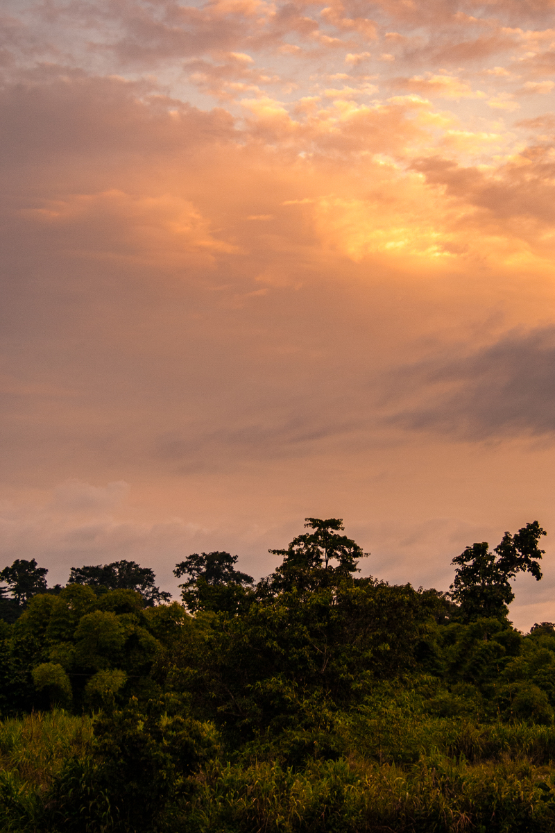 <p>Rainforest evening mood somewhere in the Volta Region, Ghana. </p>