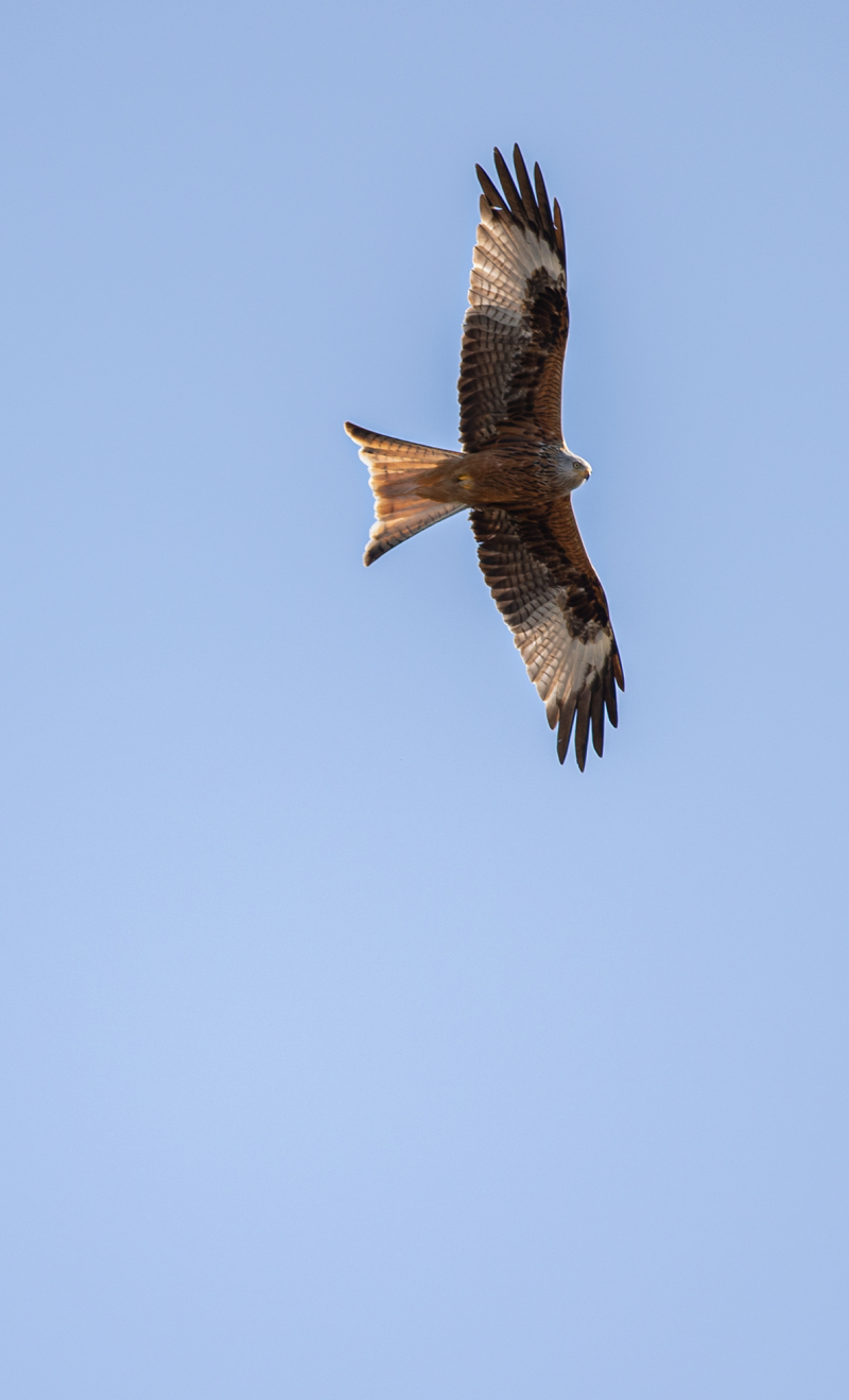 <p>A red kite is circling over our house in Zurich. As a notoriously impatient person, I am then grateful to be able to have a home office right now.</p>
