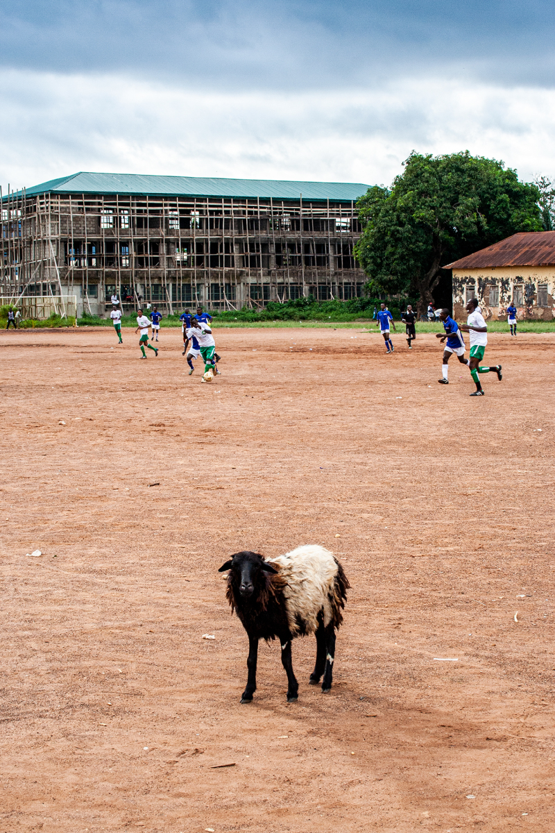 <p>A sheep on the soccer field while playing a serious match. <br />A fully normal thing in Hohoe, Volta Region, Ghana. </p>