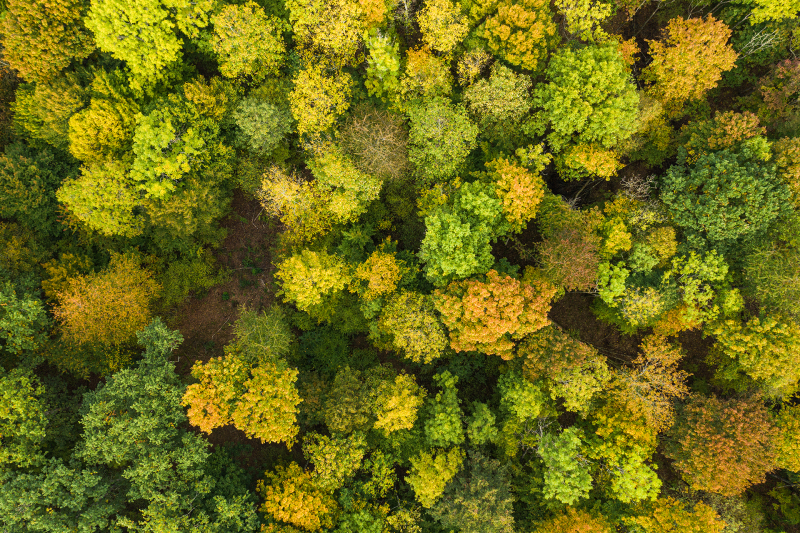 <p>Autumn in the Black Forest near Freiburg, the city where I grew up.<br />Freiburg, Germany.  </p>